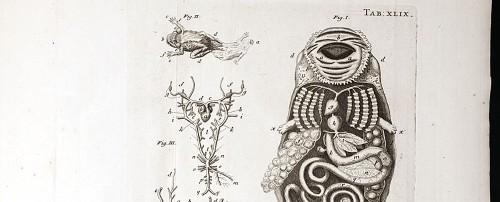 Jan Swammerdam, Bybel der Natuure . . . of, Historie de insecten, 1737-38, tadpole; frog